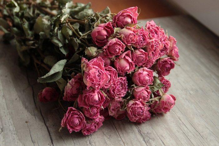 Rose, Fleurs Séchées, Roses, Fleur, Fleurs, Nature